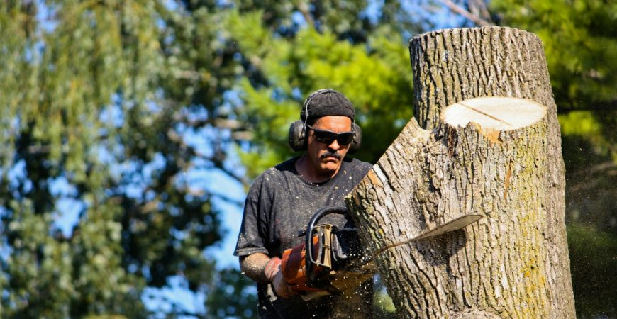 Tree and Shrub Pruning and Trimming